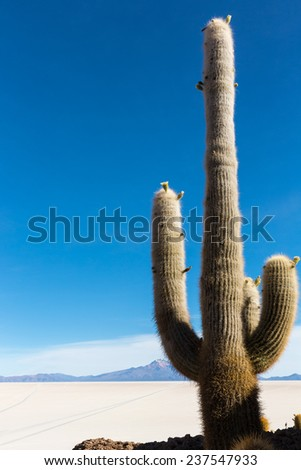 Cactus island in Uyuni Salt desert, Bolivia - stock photo
