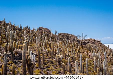 Cactus island on Salar de Uyuni, near Uyuni, Bolivia - stock photo