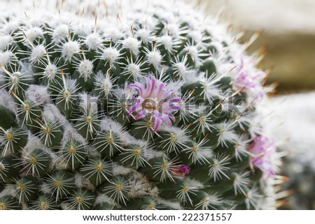 cactus/Most cacti live in habitats subject to at least some drought. Many live in extremely dry environments. - stock photo