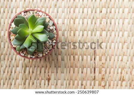 cactus on the mat - stock photo