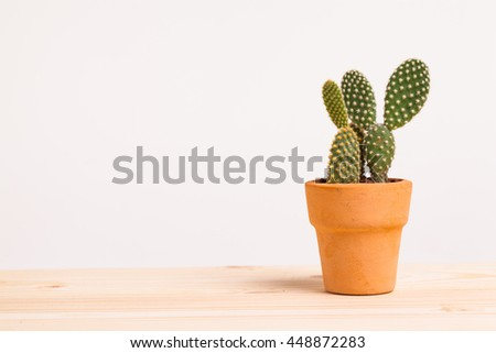 Cactus On White Background - stock photo