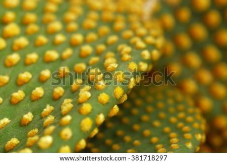 Cactus plant close up selective focus - stock photo