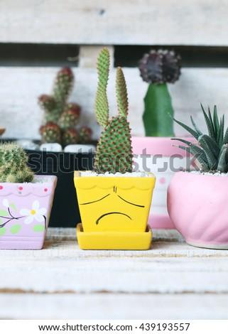 Cactus plant in flowerpot ,Houseplant Concept. - stock photo