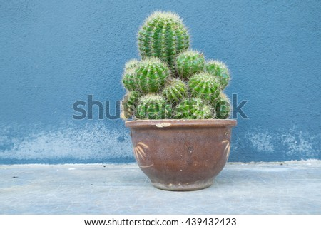 Cactus pot in concrete wall background - stock photo