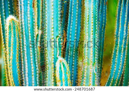 Cactus Specie Closeup Photo. California Cactuses. - stock photo
