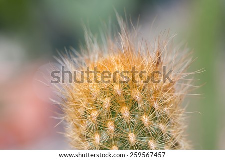 Cactus. Succulent. Macro view, soft focus. - stock photo