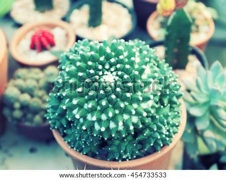Cactus succulent plant in flowerpot ,Houseplant Concept - vintage filter. - stock photo