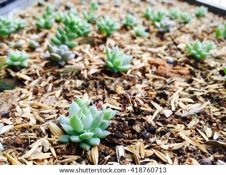 Cactus succulents in a planter. - stock photo