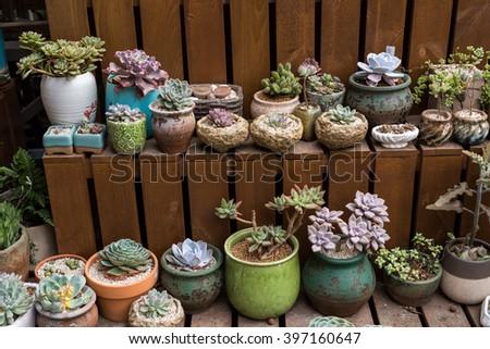 cactus succulents in garden - stock photo