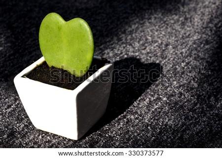 Cactus Tree with Love Symbol - stock photo