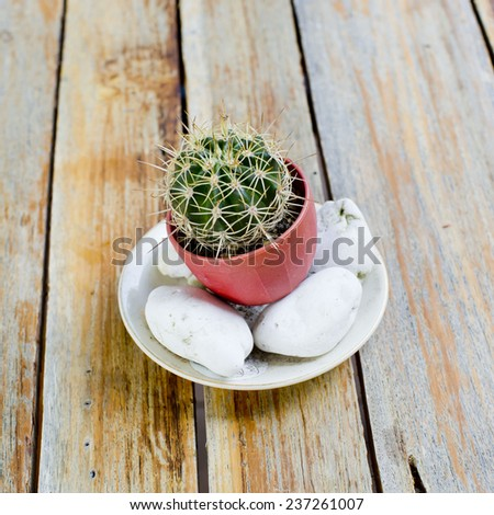 Cactuses in flowerpot with stones,on wooden table - stock photo