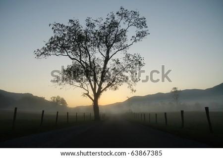 Cades Cove road, tree and fog at sunrise - stock photo