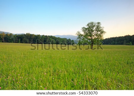 Cades Cove the great smoky mountains national park, lonely tree in the meadow - stock photo