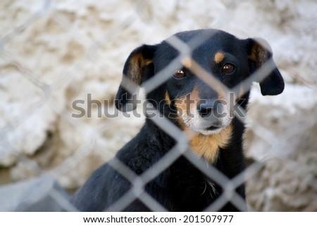 Caged dog - stock photo