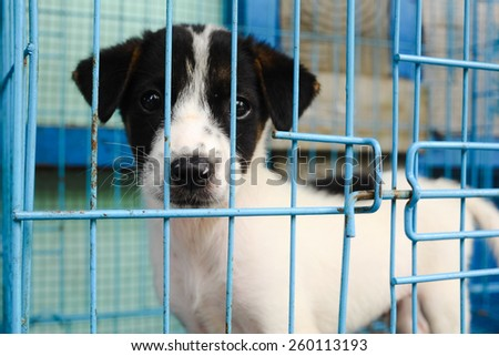 caged puppy - stock photo