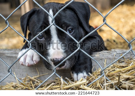 caged puppy waiting for adoption  - stock photo