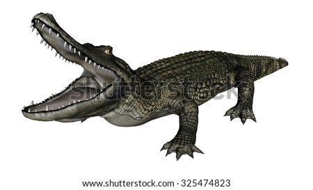 Caiman  roaring isolated in white background - 3D render - stock photo