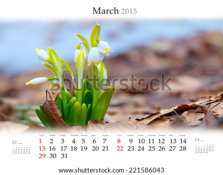 Calendar 2015 . March. First flowers in the spring forest. - stock photo