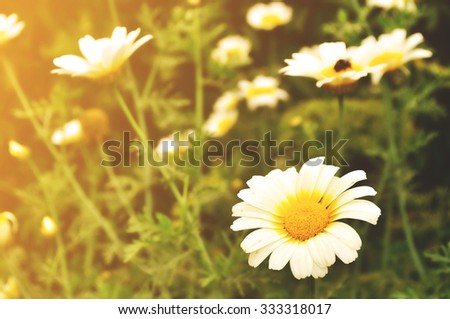 Calendula flower in the meadow under sunlight - summer floral landscape. Focus at the flower - stock photo