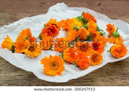 Calendula flowers harvested for drying on a paper and rustic wooden table - stock photo