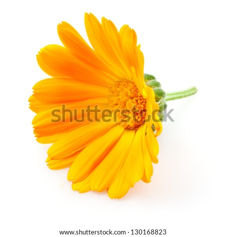 Calendula. flowers isolated on white - stock photo