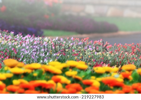 calendula, portulaca and pansies in cottage garden setting of toowoomba carnival of flowers - stock photo