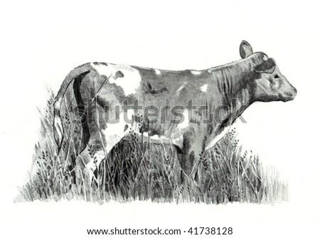 Calf Pencil Drawing - stock photo