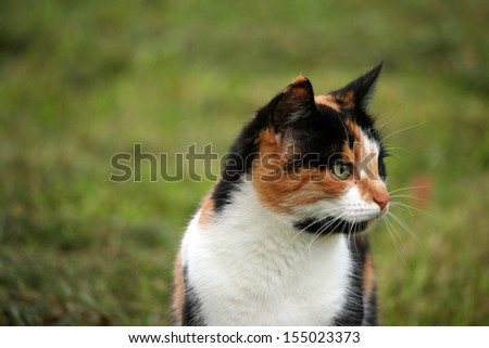 Calico cat in grass in summer - stock photo