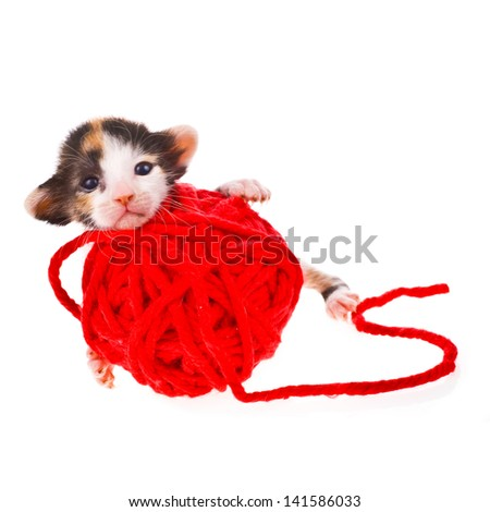 Calico cat - little kitty  with a red ball of wool  isolated on white background - stock photo