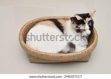 calico cat sleep in basket - stock photo