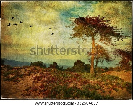 California Cypress Trees And Skyscape - stock photo