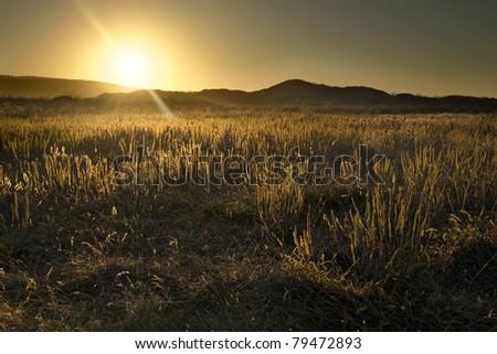 California Desert Sunrise - stock photo