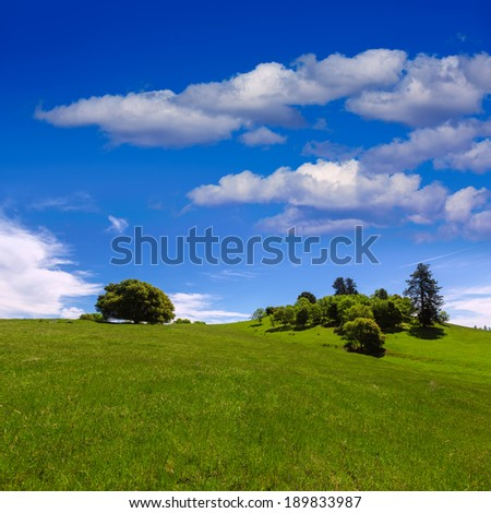 California meadow hills with oak tree in USA - stock photo