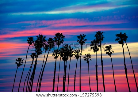 California palm trees group sunset with colorful sky - stock photo