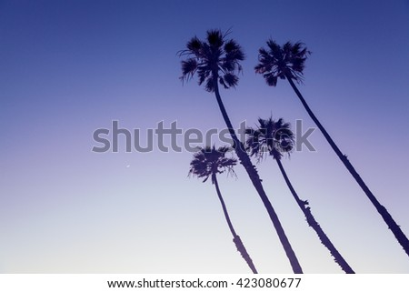 California Palm Trees view in Sunset Cliffs, San Diego, USA - stock photo