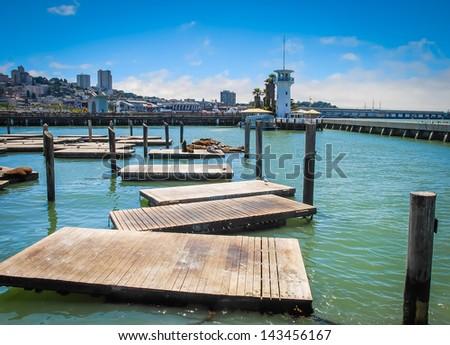 California sea lion platforms at Pier 39 in San Francisco, United States - stock photo