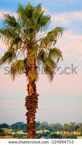 California Sunset Palm Tree, USA - stock photo