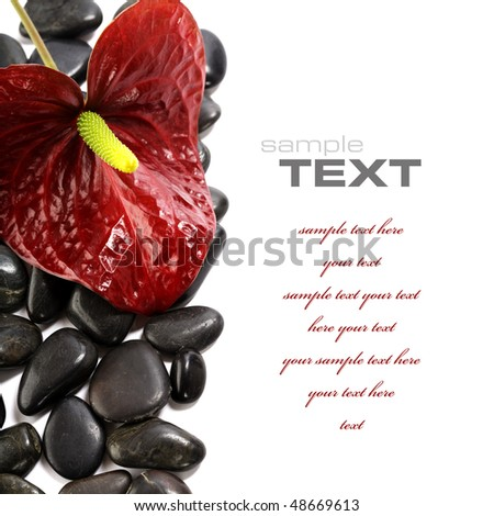 Calla and pebbles on white - Wellness and Beauty concept (with sample text) - stock photo