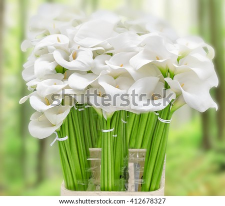 Calla lily  on green background - stock photo