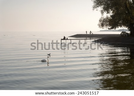 Calm evening at he laggon, Swan and seagulls in the sea, people relaxing - stock photo