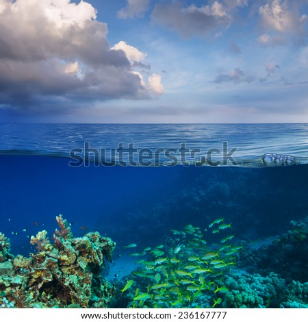 Calm sea with cloudy sky and underwater world full of fish discovered - stock photo