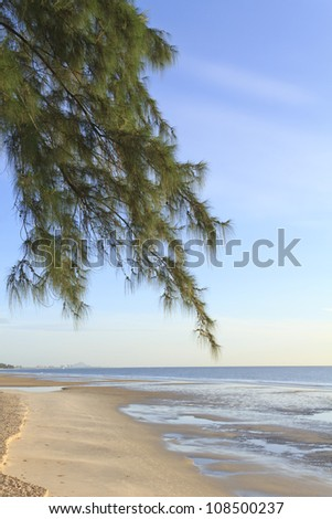 calm shot of a beach in thailand with branch of pine tree as fore - stock photo