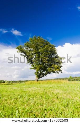 Calm Solitude Plain Nature  - stock photo