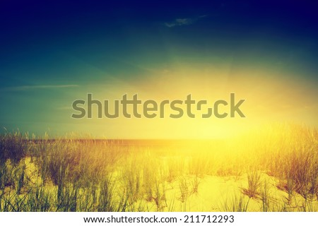 Calm sunny beach with dunes and green grass. Ocean in the background. Vintage - stock photo