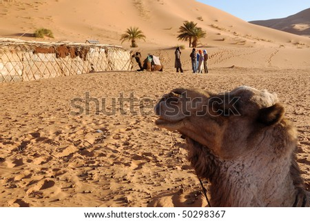 camel and berberes in a desert camping - stock photo