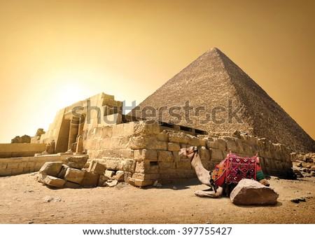 Camel and ruined pyramid - stock photo