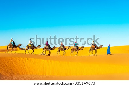 Camel caravan going through the sand dunes in the Sahara Desert, - stock photo