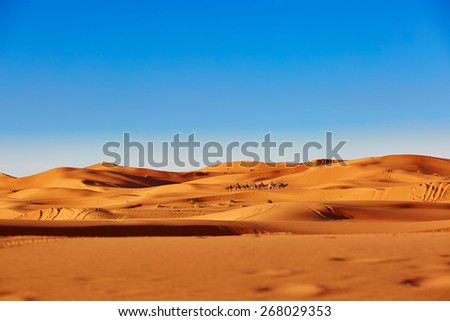 Camel caravan going through the sand dunes in the Sahara Desert, Merzouga, Morocco - stock photo