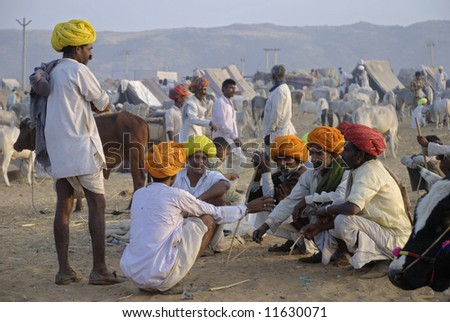 camel fair pushkar, rajasthan, livestock trading and festivities, india - stock photo