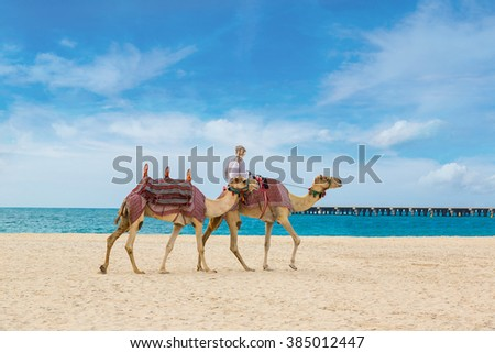 Camel in front of Dubai Marina in a summer day, United Arab Emirates - stock photo